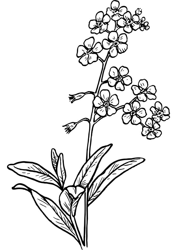 small flowers coloring page