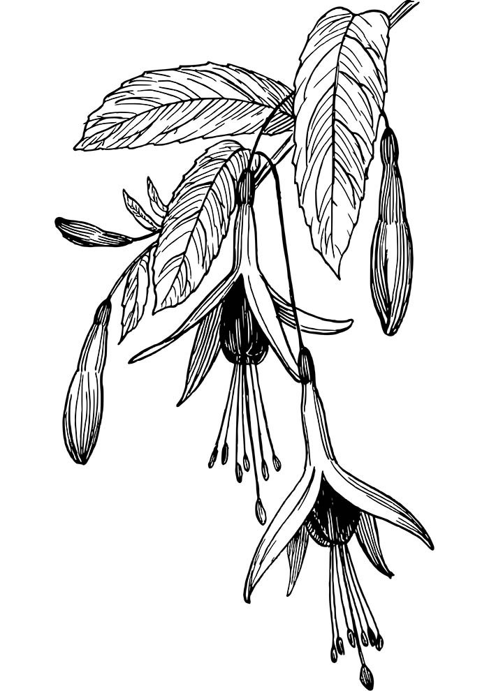 suspended flower coloring page