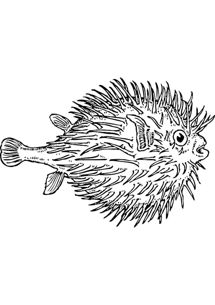 thorn fish coloring page
