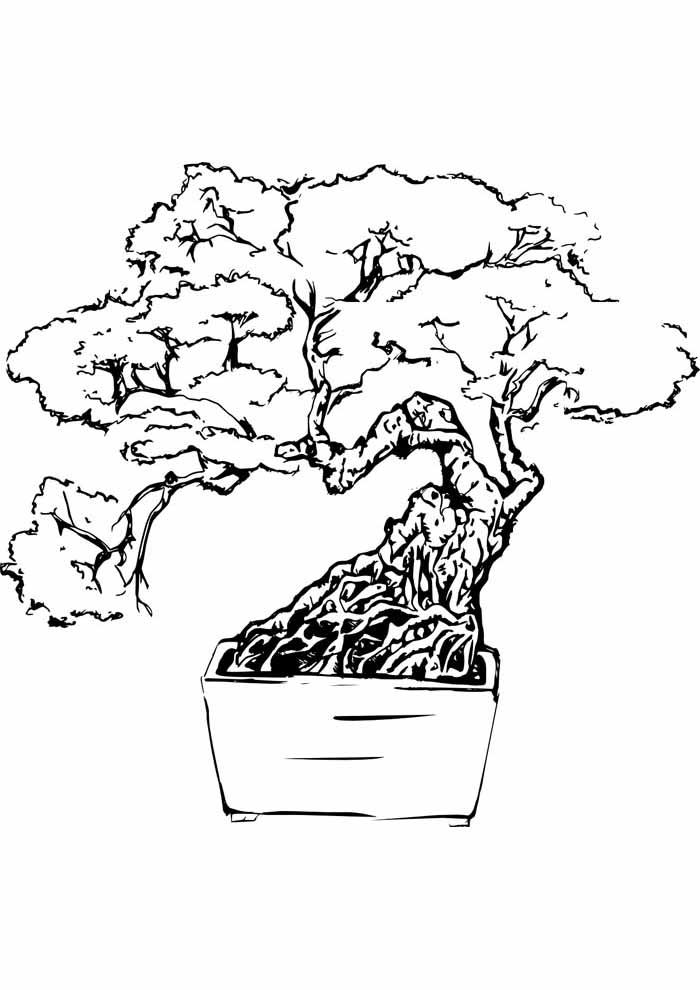 tree coloring page bonsai