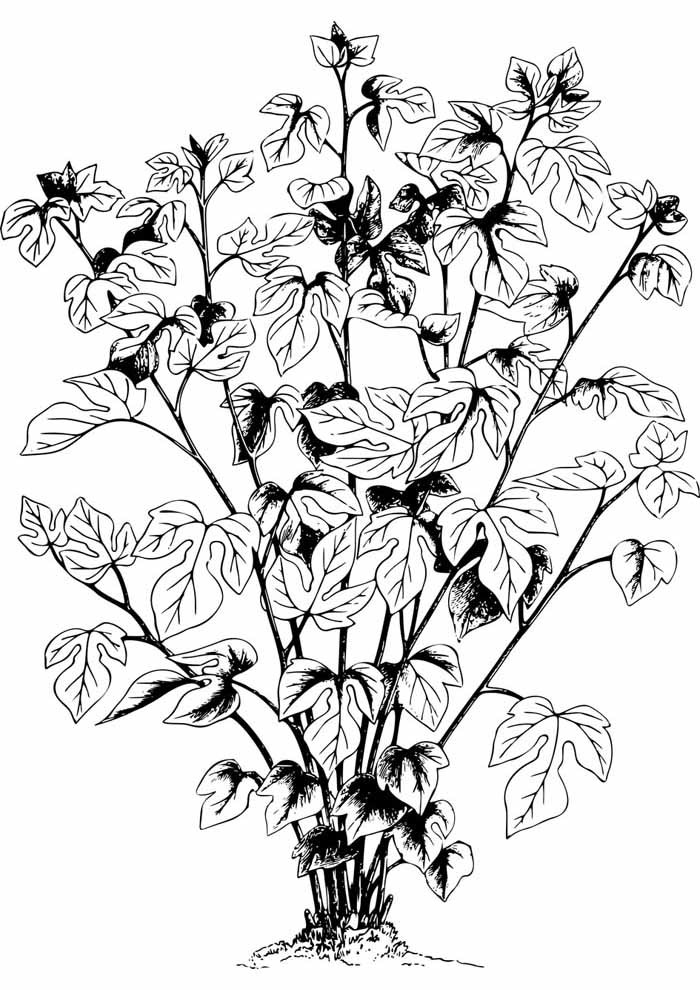 tree coloring page leaves