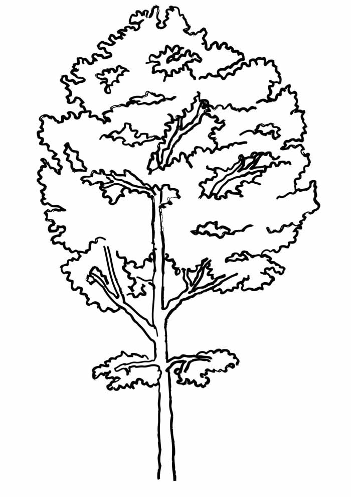 tree coloring page tall