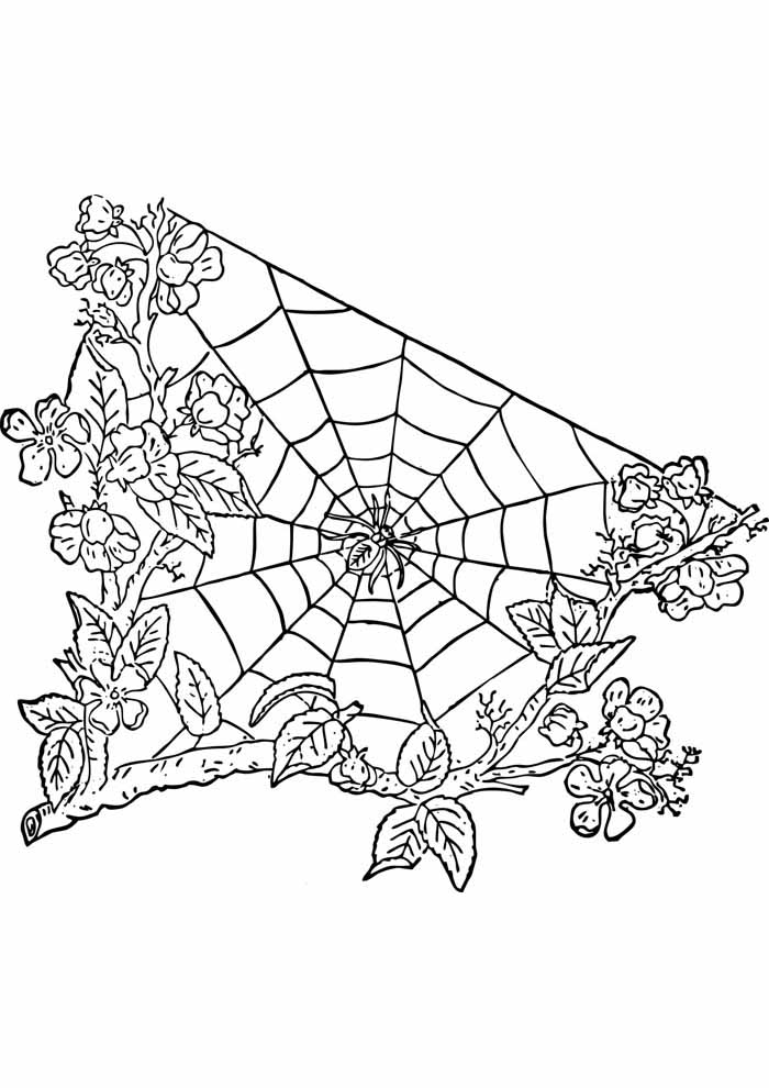 tree coloring page with web