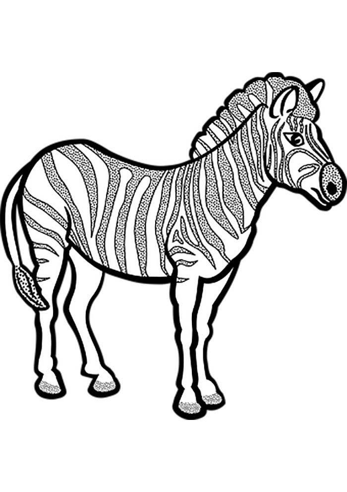 zebra colouring picture