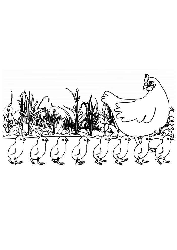 Chicken coloring page 30
