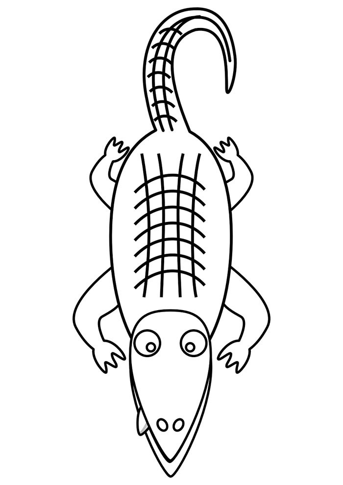 alligator coloring page 13
