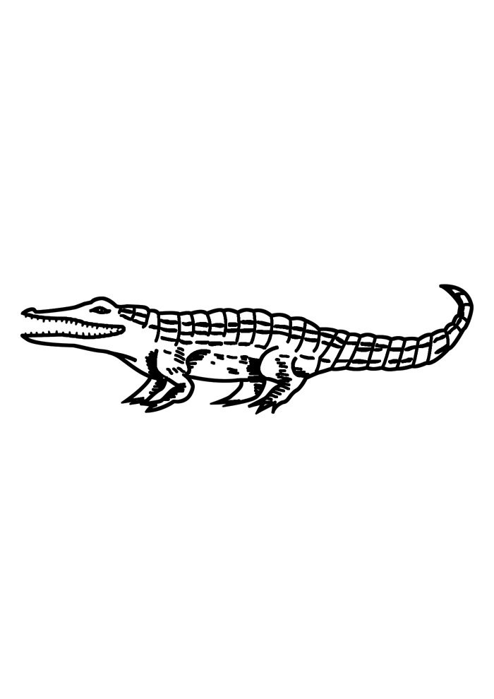 alligator coloring page 18