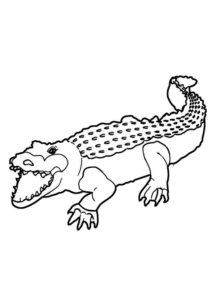 alligator coloring page 24