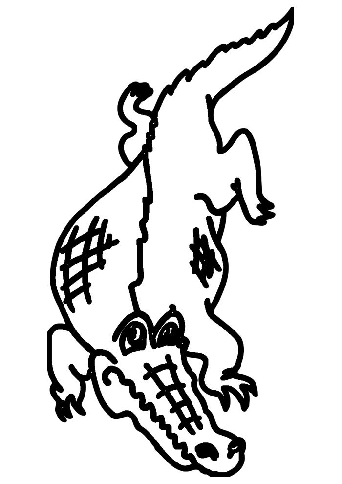 alligator coloring page 38