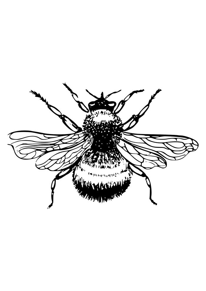 bee coloring page 27