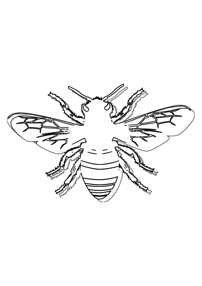 bee coloring page 38