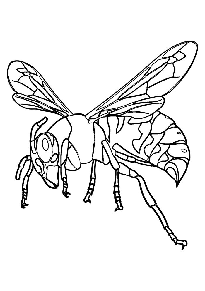 bee coloring page 40