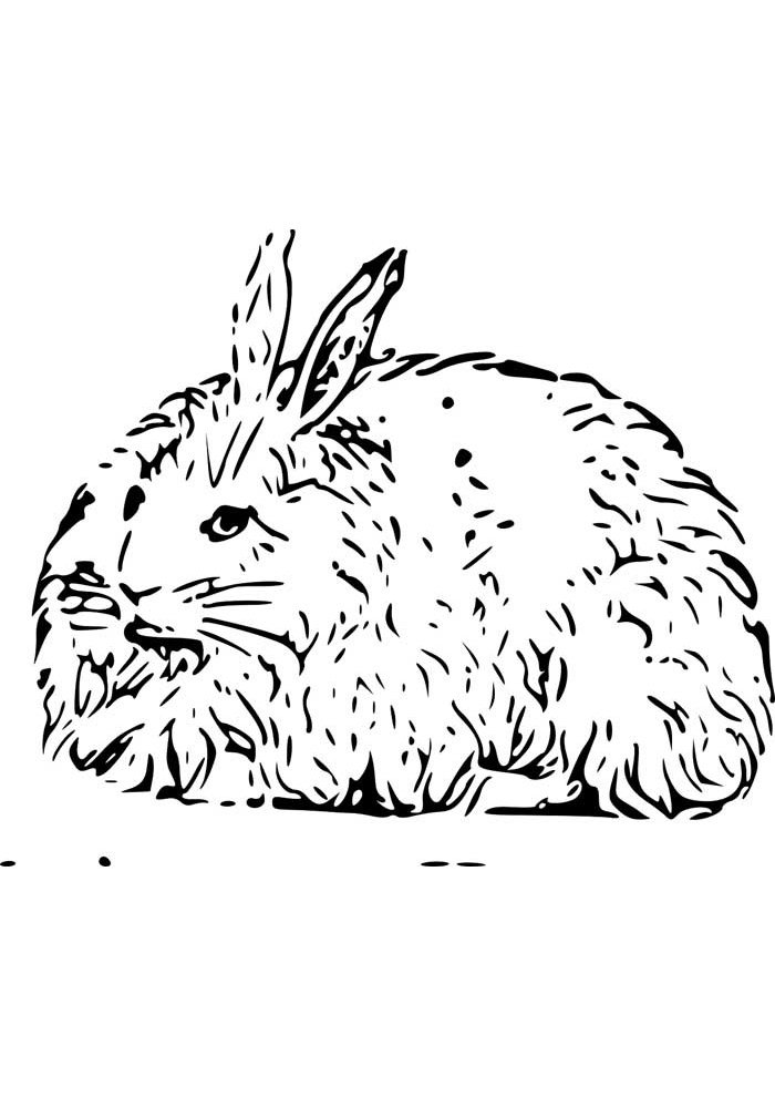 bunny coloring page 20