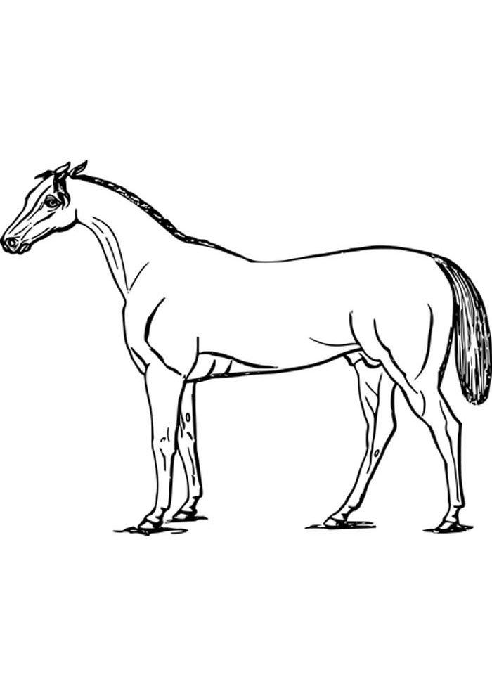 caballo para colorear 4