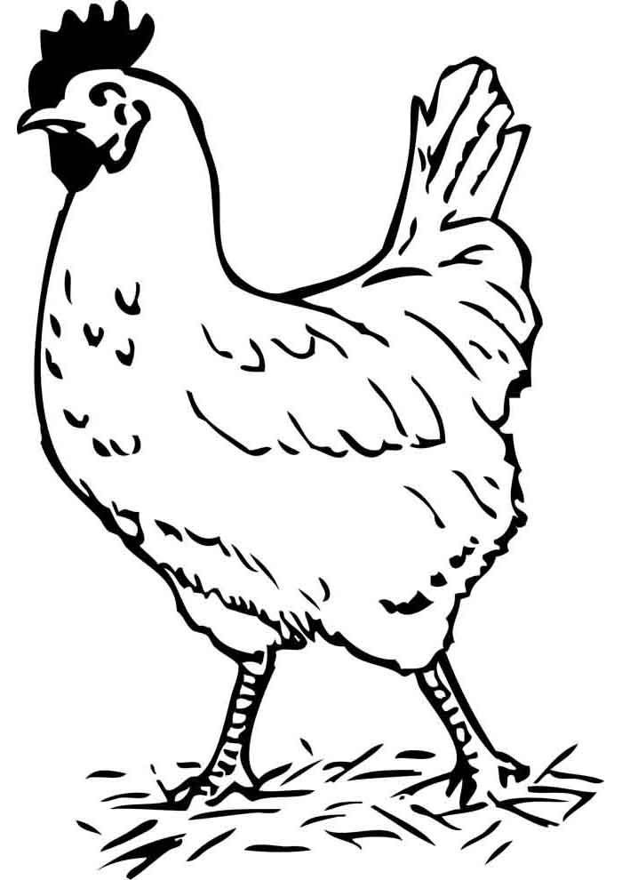 chicken coloring page 11