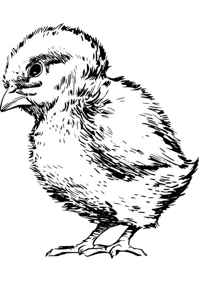 chicken coloring page 13