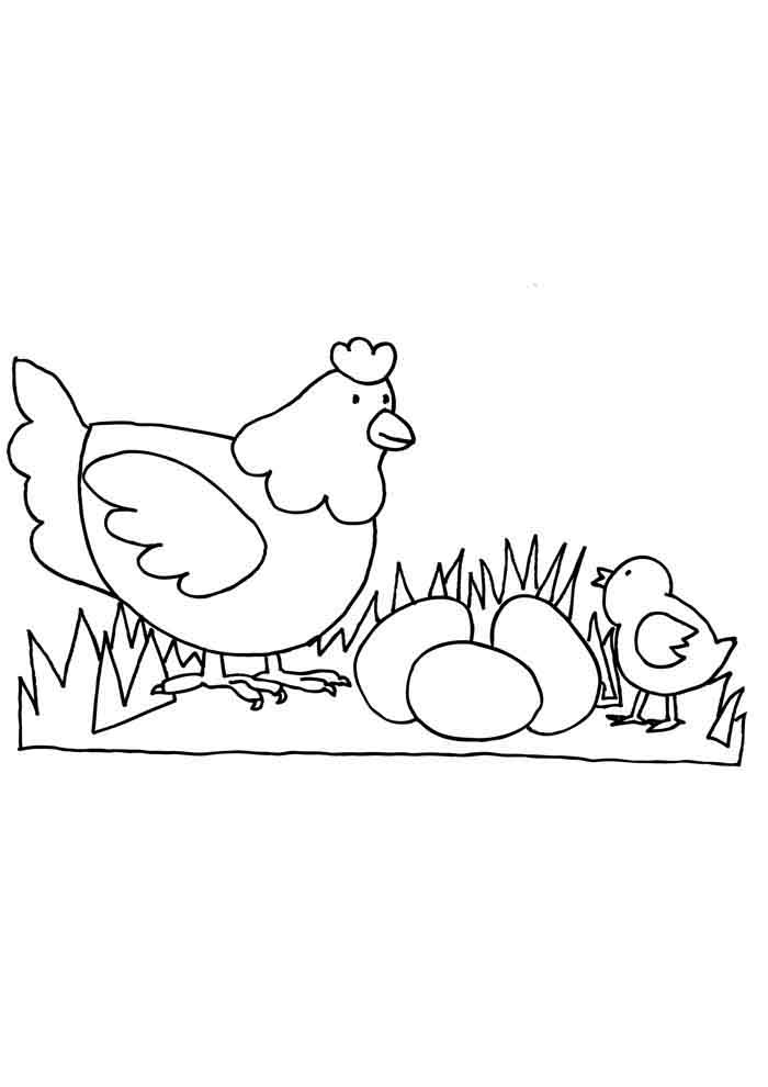chicken coloring page 3