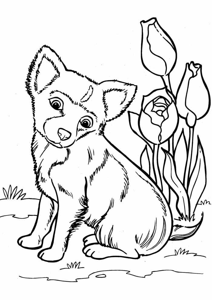 coloriage chien 16