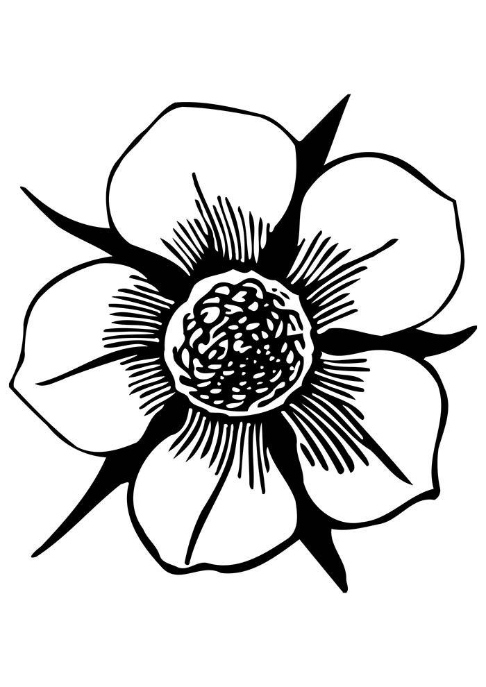 coloriage fleur 16