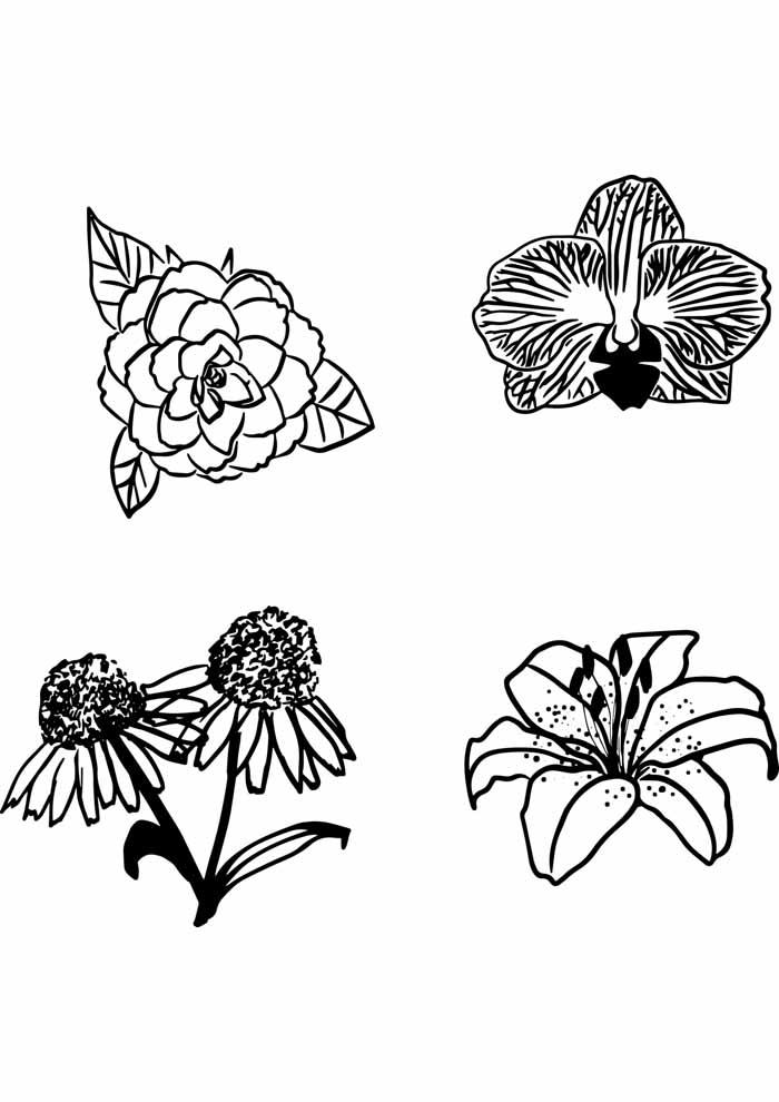 coloriage fleur 27