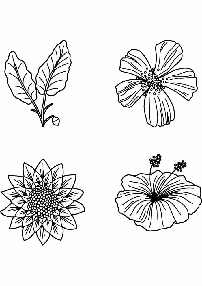 coloriage fleur 29