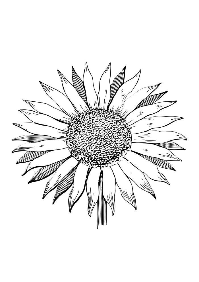 coloriage fleur 37