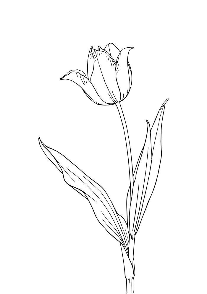 coloriage fleur 39