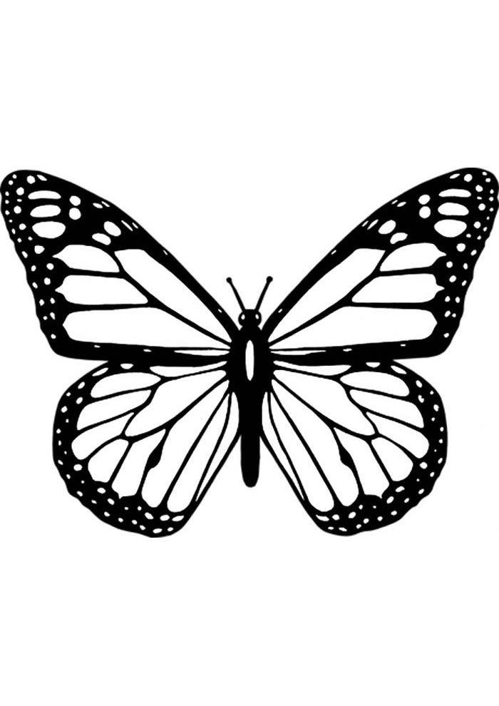 coloriage papillon 14