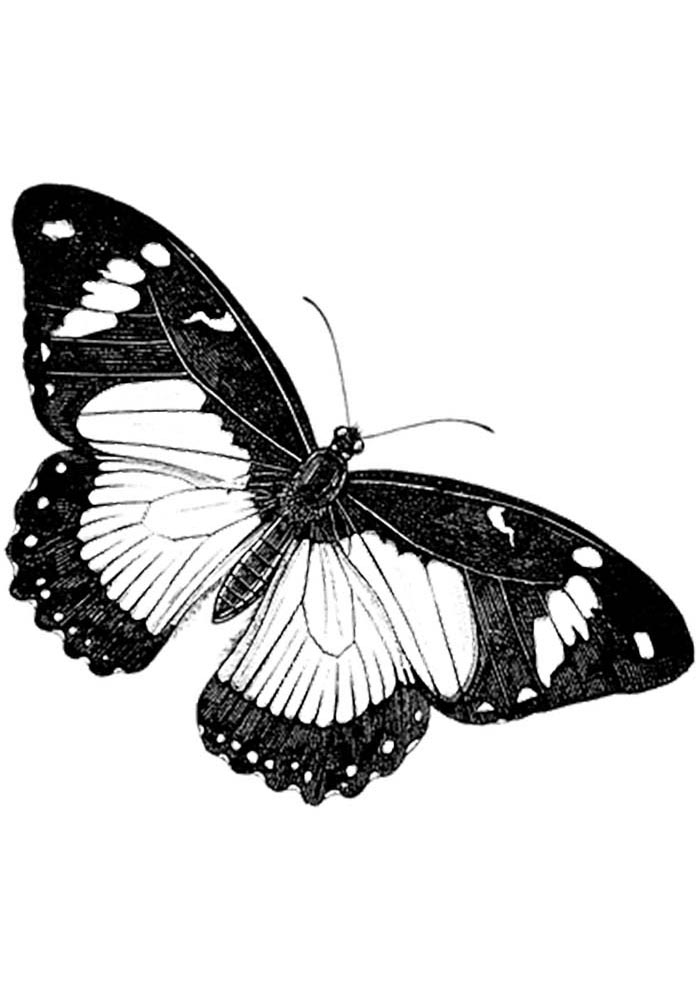 coloriage papillon 18