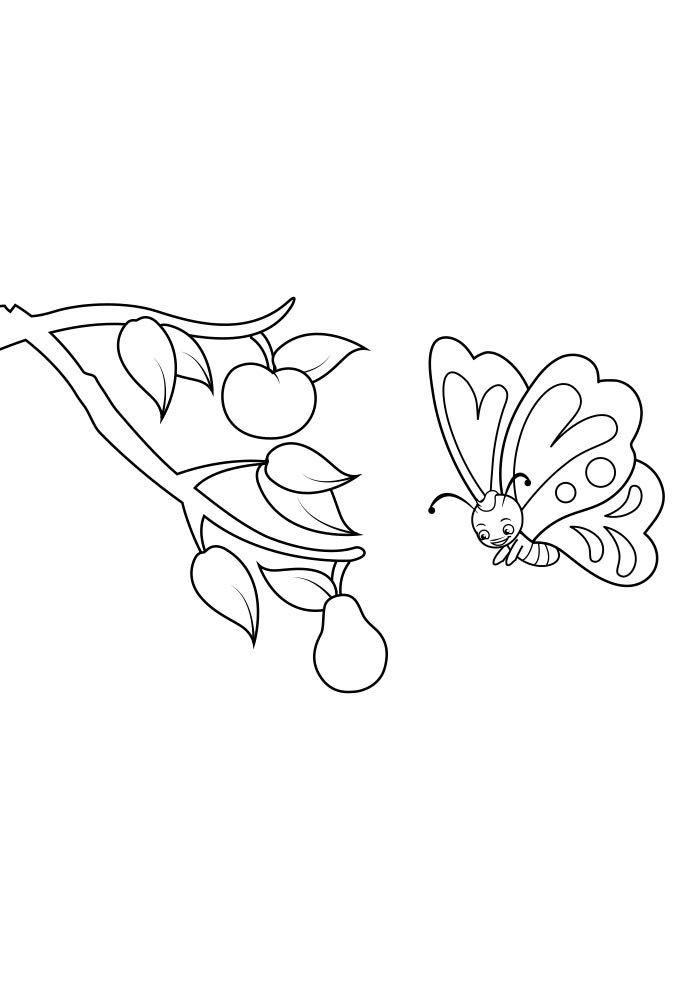 coloriage papillon 29