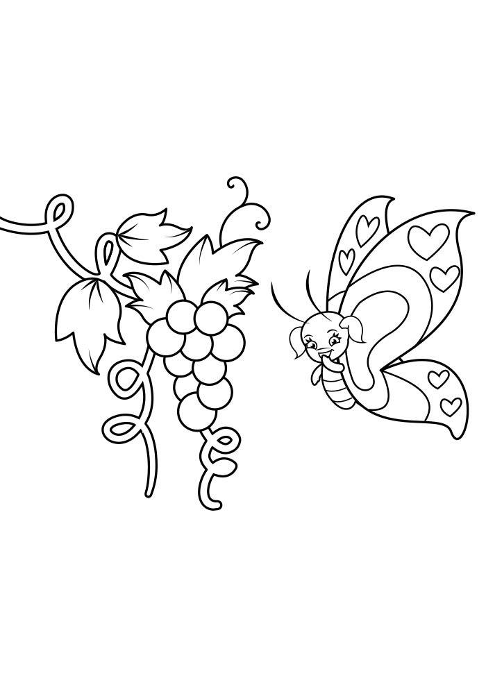 coloriage papillon 30