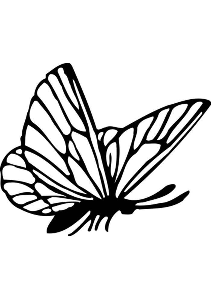 coloriage papillon 5
