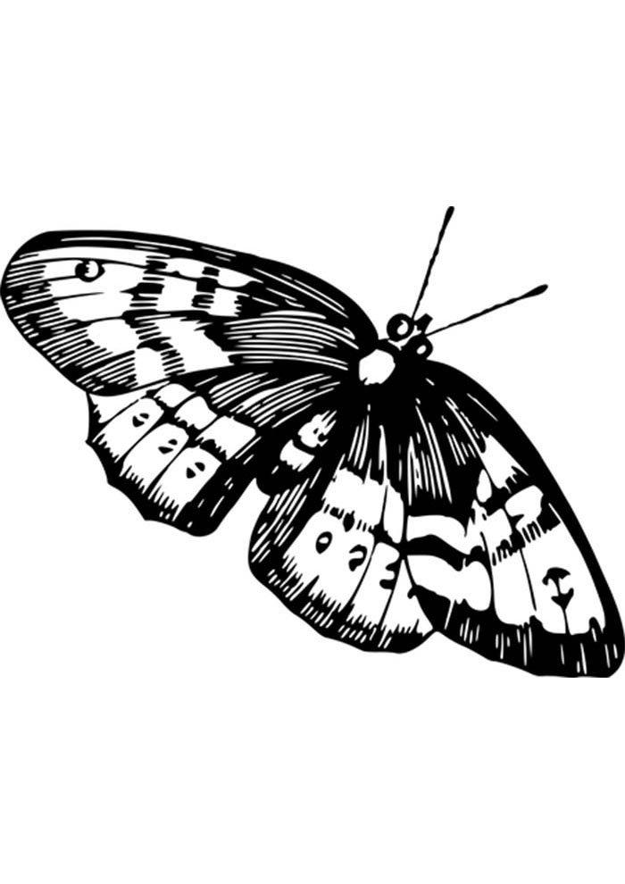 coloriage papillon 7