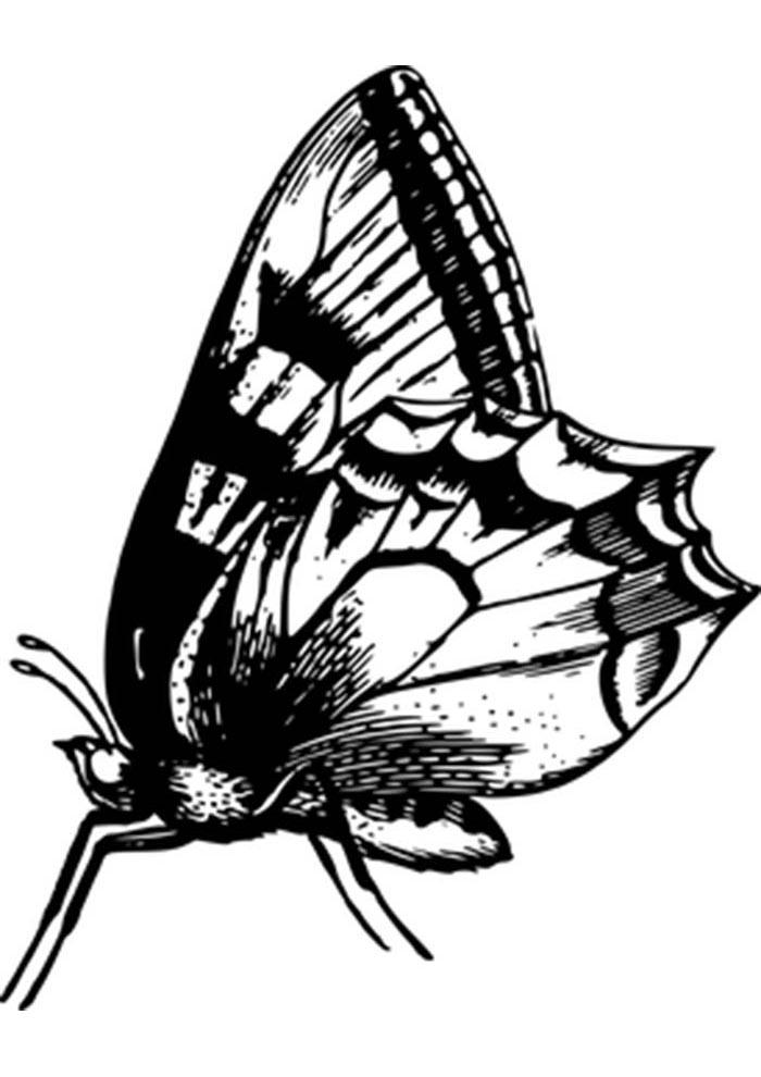 coloriage papillon 8