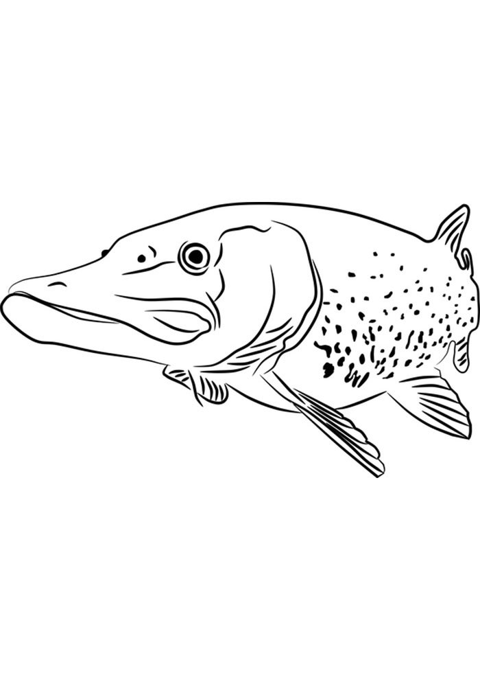 coloriage poisson 11