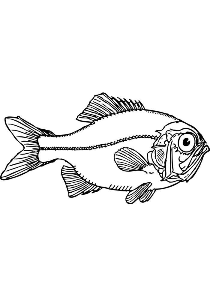 coloriage poisson 14