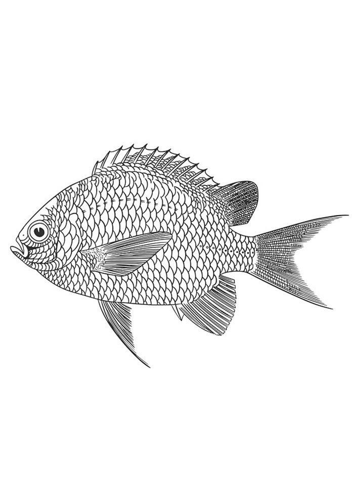 coloriage poisson 30
