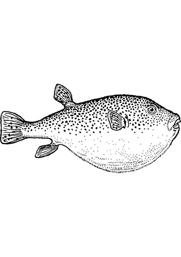 coloriage poisson 33
