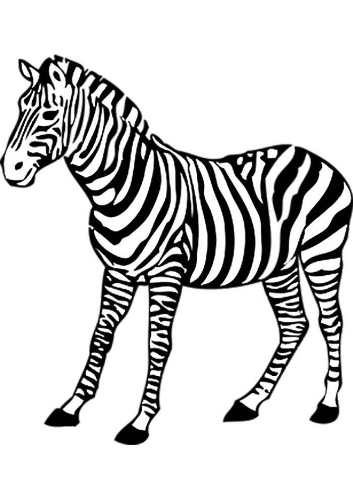 coloriage zebre