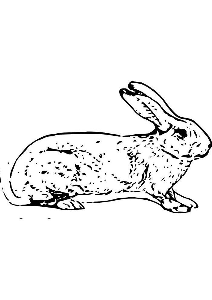 conejo para colorear 12 1