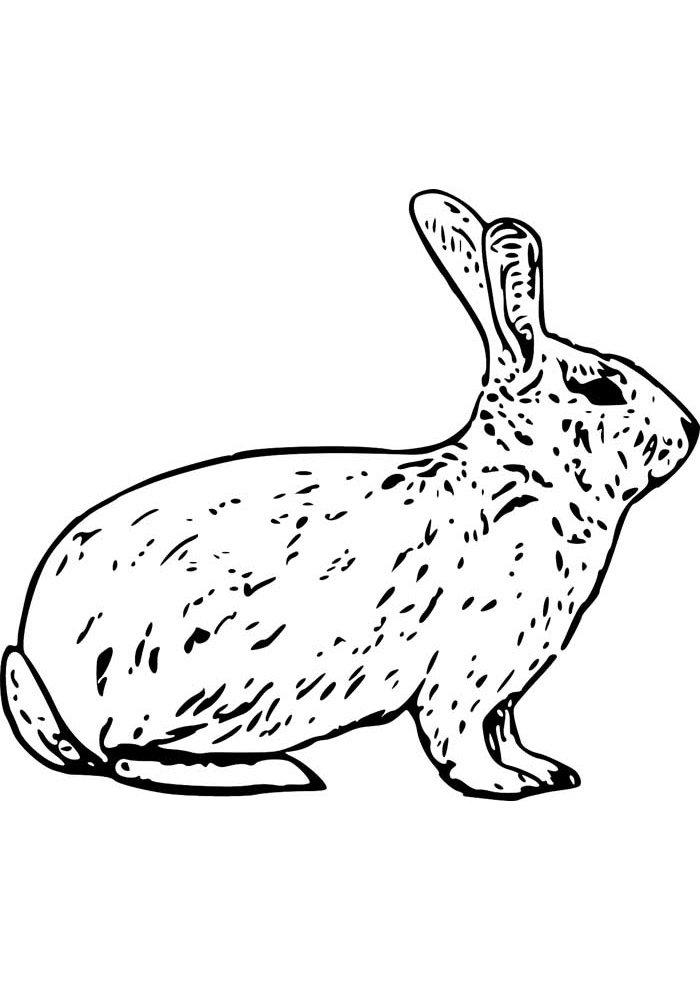conejo para colorear 16 1