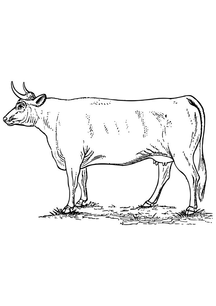cow coloring page 10