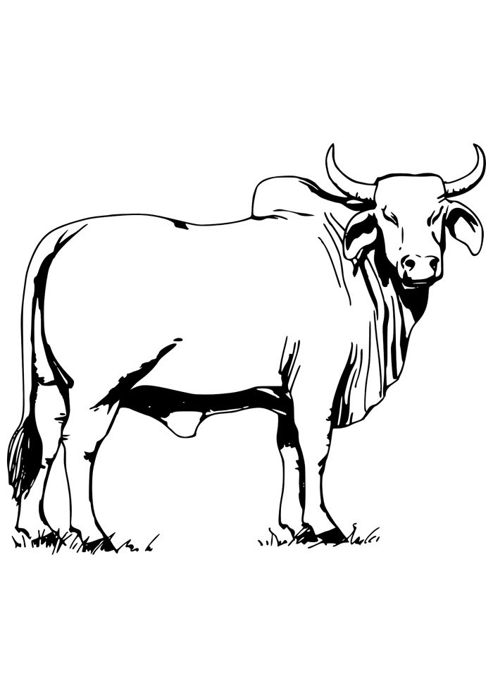 cow coloring page 12