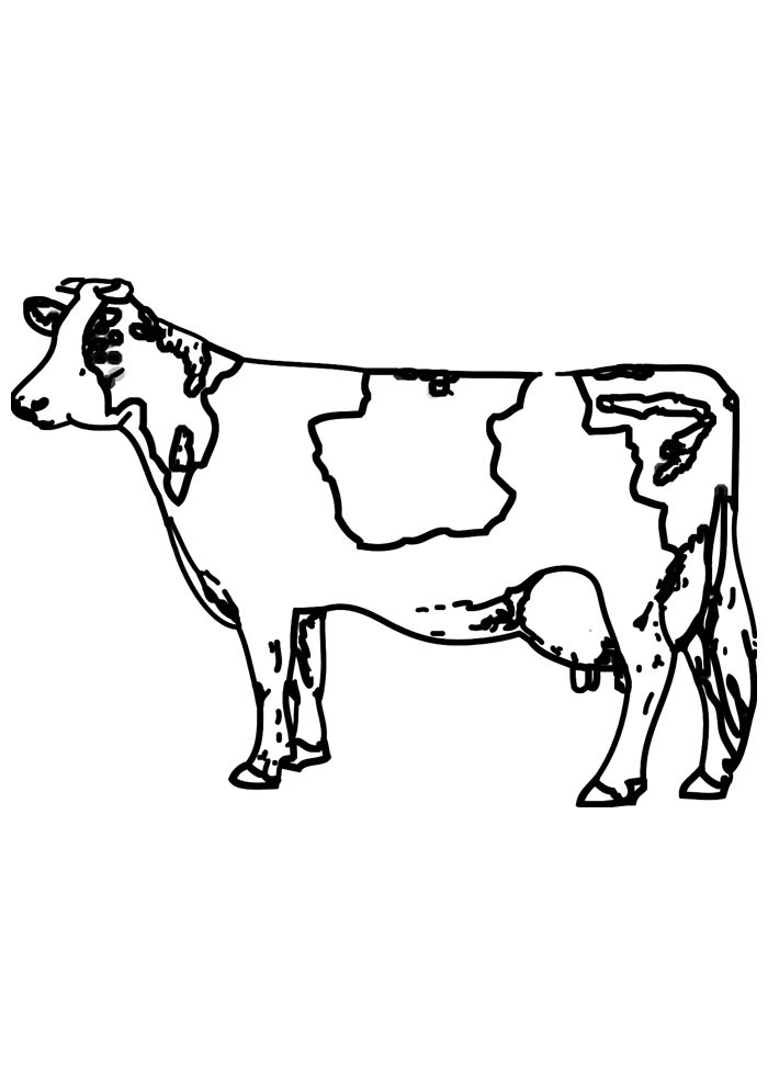 cow coloring page 13