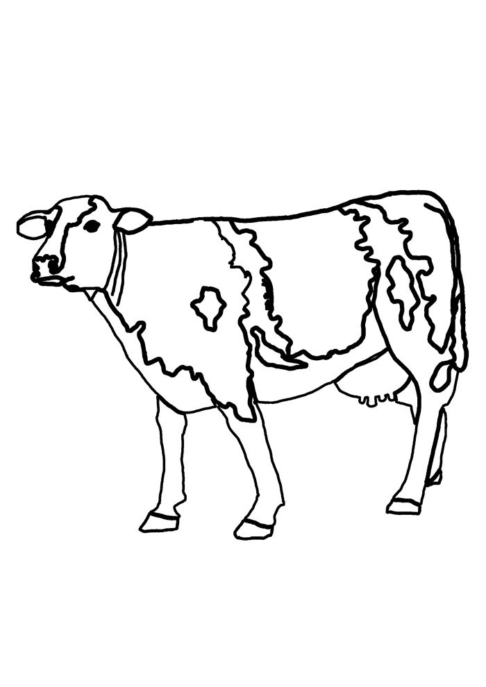cow coloring page 26