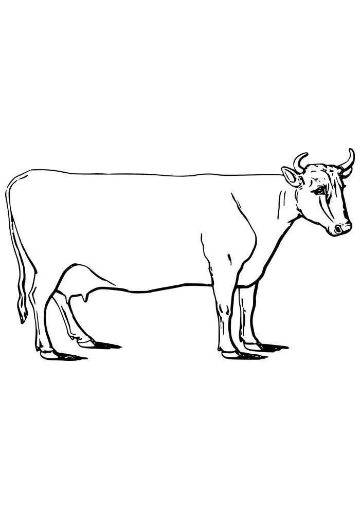 cow coloring page 3