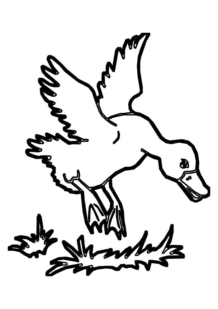 duck coloring page 13