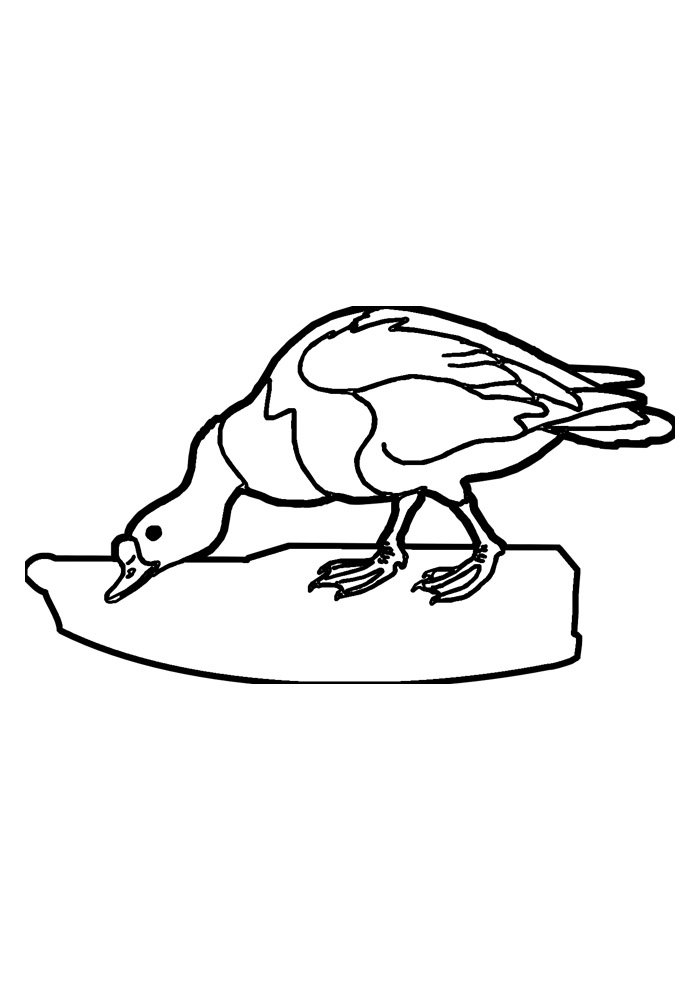 duck coloring page 15