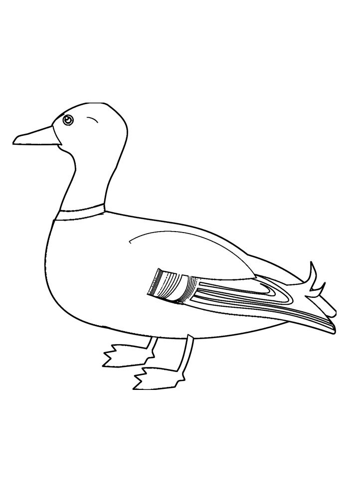duck coloring page 16
