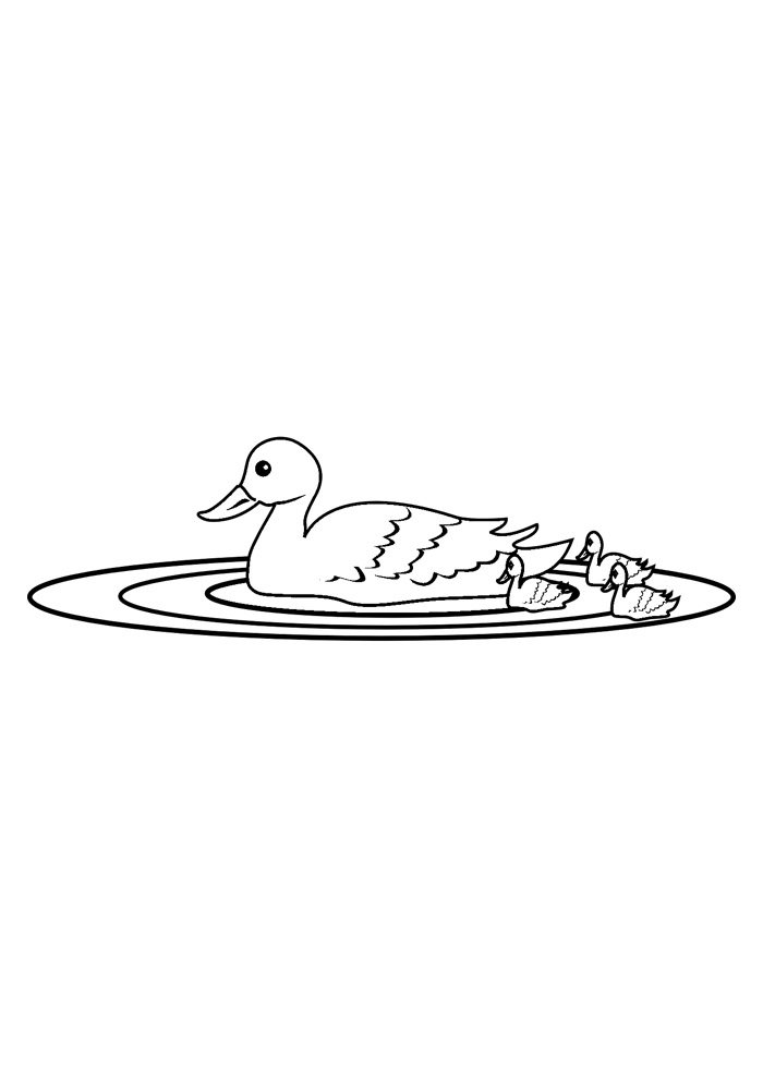duck coloring page 18